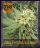 710 Genetics Pure Jack Female 5 Marijuana Seeds